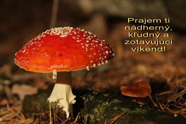 muchotravka_vikend