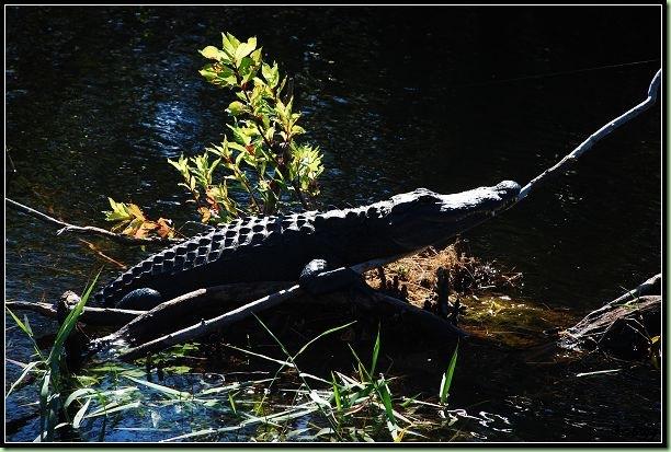 2008-12-21 Trip to FL 3 030