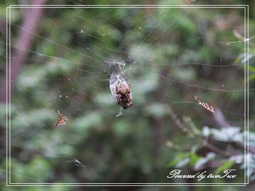 蜘蛛的晚餐