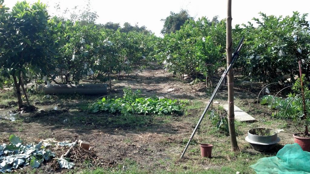 Organic Garden有機