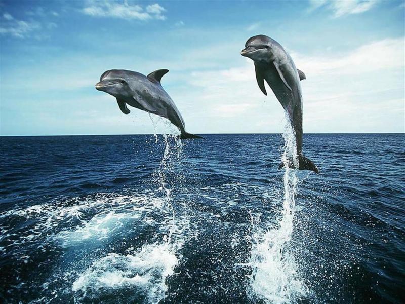delfines en su ambiente